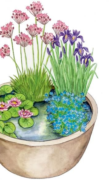 Romantischer Mini-Teich: Die runde Schale aus glasierter Keramik verschönern Wasserpflanzen mit gedeckten Blütenfarben. Dabei bilden rosa Schwanenblume (Butomus umbellatus) und blaue Asiatische Sumpf-Schwertlilie (Iris laevigata) den passenden Rahmen für die rosa Zwerg-Seerose (Nymphaea) und das hellblaue Sumpf-Vergissmeinnicht (Myosotis palustris)