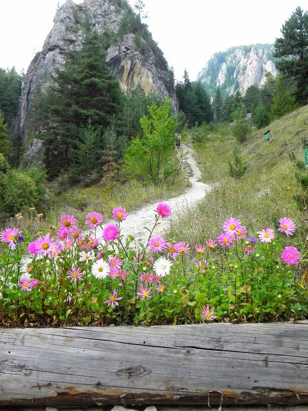 The Bicaz Canyon (Romanian: Cheile Bicazului, Hungarian: Békás-szoros -- literally The Keys of Bicaz) is a canyon in Romania, located in the north-east part of the country, in Neamţ and Harghita counties.