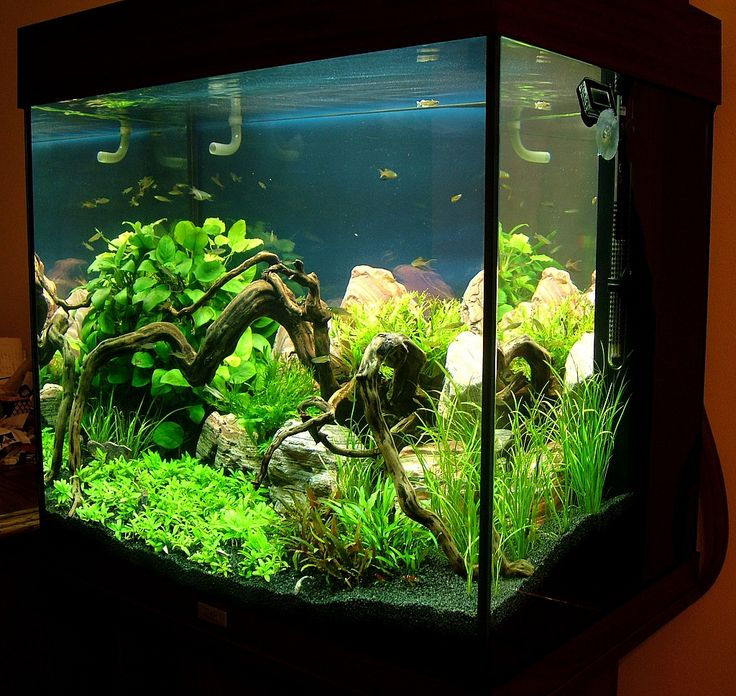 juwel lido google search akvarium pinterest aquariums. Black Bedroom Furniture Sets. Home Design Ideas