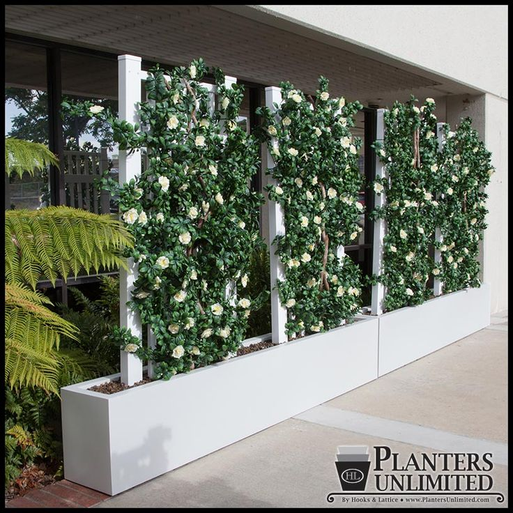 Space Dividers - to hide utility from pool area - plant with bougainvillea