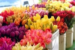 http://www.zapatag.com/profile/profile  Look At This Where Can I Buy Cheap Flowers,  What Will Order Flowers Online For Delivery Resemble in 100 Years? The Unexposed Nice Secret of Flowers Order.