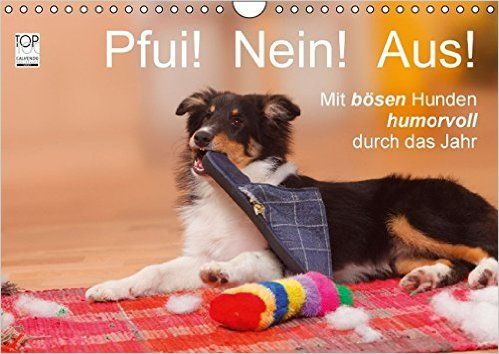 "Über 1.000 Ideen zu ""Hundefotos auf Pinterest | Hund, Hundeschule ..."