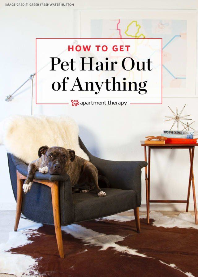 How To Remove Pet Hair From Furniture Floors And More Pet Hair Removal Pet Hair Cleaning Hacks