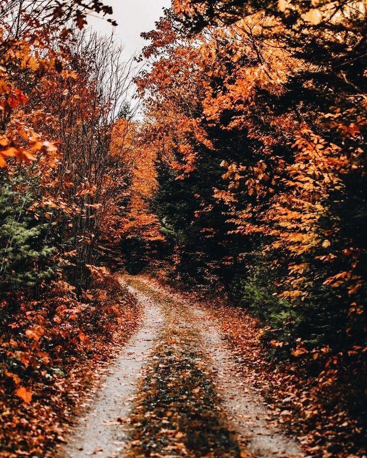Autumng Asthetics: Autumn Cozy, Autumn