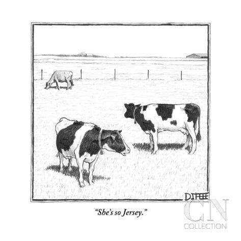 ohh my gosh i love that  new yorker cartoons cows funny