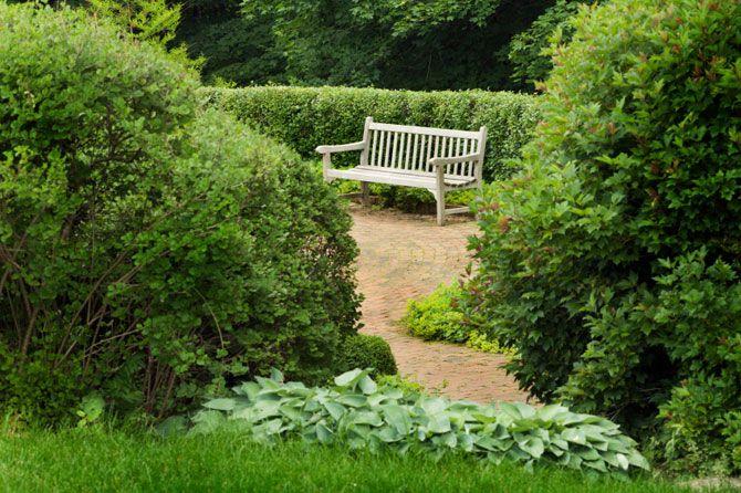 Shade Loving Plants For Cool Dark Garden