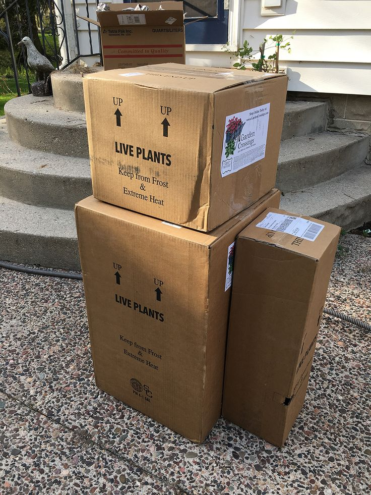 The Impatient Gardener: MAIL ORDER PLANTS REVIEW: GARDEN CROSSINGS & CLASSIC VIBURNUMS