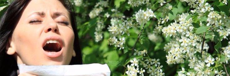 Natuurlijke remedies die hooikoorts bestrijden   Die mooie lente heeft ook zijn nadelen. Alles wordt nieuw, nieuw leven komt uit de grond, het gras gaat weer groeien, de di