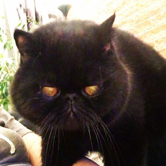 I look too serious, don't I? �� #exóticshorthair #exotıcshorthaircat #exotic #pesian #bestcatever #lovecats���������������������� #meow #meowcat #meowlife #catstagram #catsoninstagram #catsofworld #blackcatsrule #catsruleeverythingaroundme #котики�� #котик #экзотическаякороткошерстная #экзотическая_короткошерстная #экзот http://www.butimag.com/pesian/post/1478463770593421242_3986445655/?code=BSEjvdTgWe6
