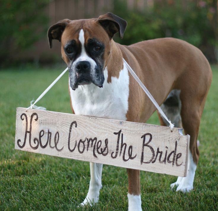 "The cutest ""Here comes the bride"" announcement we've ever seen. #MarthaStewartWeddingsMagazine"