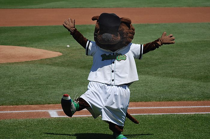 Fungo the Fisher Cat, New Hampshire Fisher Cats mascot; AA Eastern League. | MiLB Mascots: AA ...