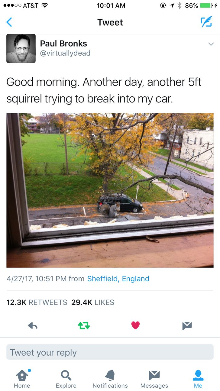 """Wow...didn't know things had gotten that bad in England... ...""""Thug Life"""" squirrels."""