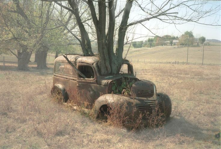 Tree growing through abandoned 1930s/1940s truck.