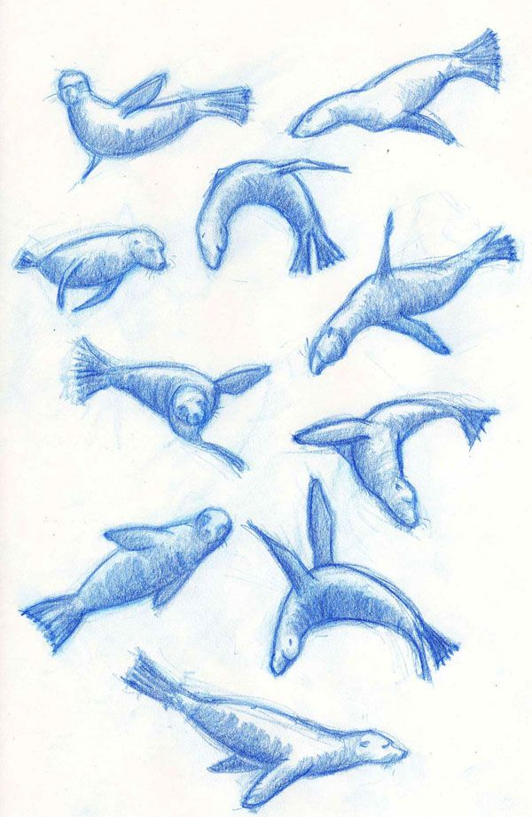 sea lion tattoo designs