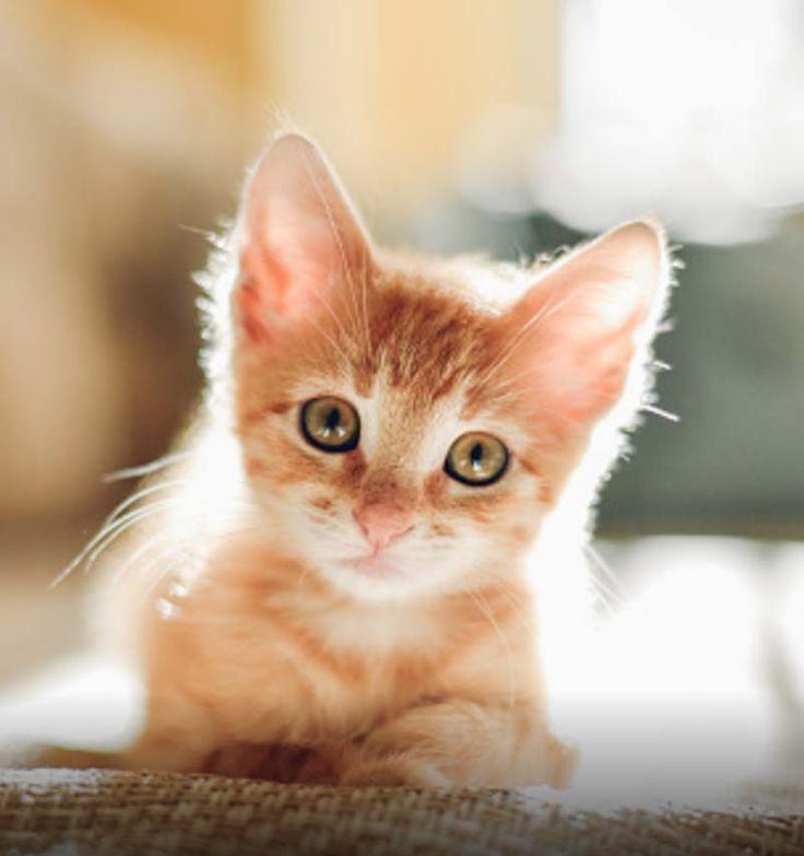 Looking for veterinary technician schools in mullins sc