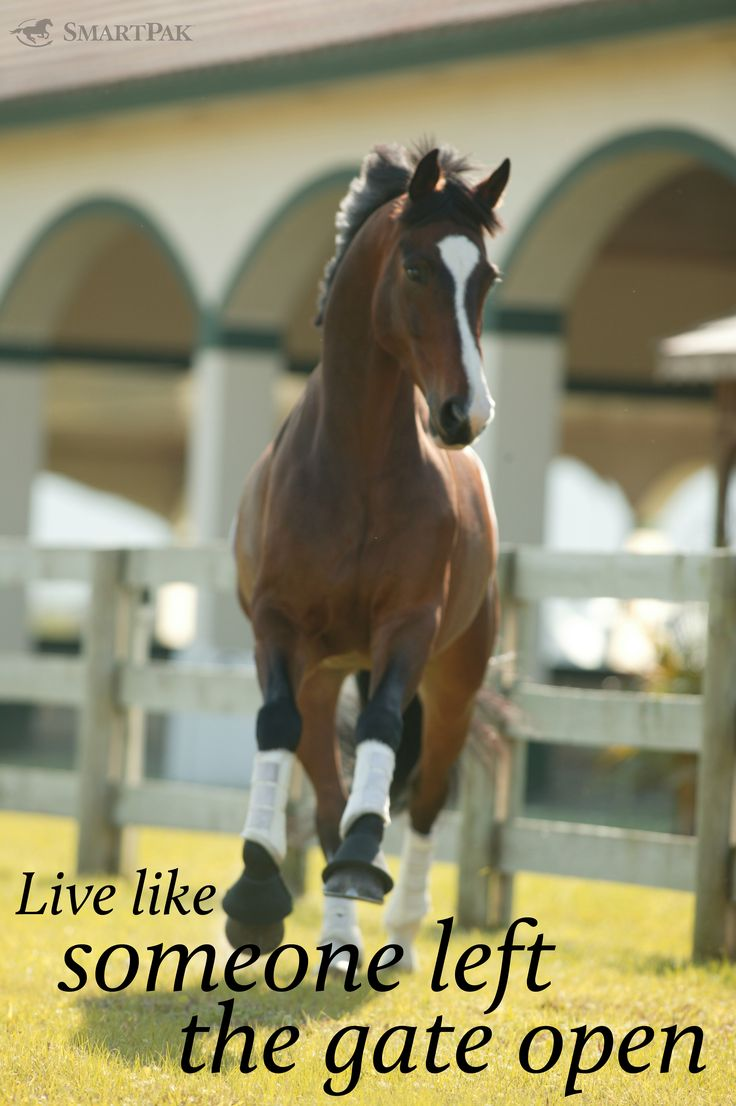 230 best Horse And Rider Quotes images on Pinterest | Equestrian ...