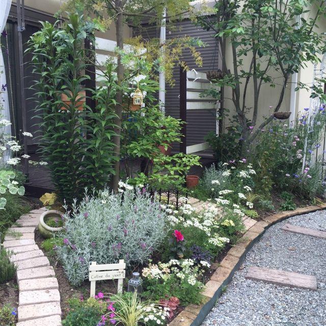 cherryさんの、芝生の庭から草花木果の庭へ,砂利の小道DIY,作業用レンガの小道,こぼれ種で育ったミモザ,ウッドフェンスDIY,ガーデン,ガーデニング,手作りの庭,テラス,ウッドデッキ,植物,ベッド周り,のお部屋写真