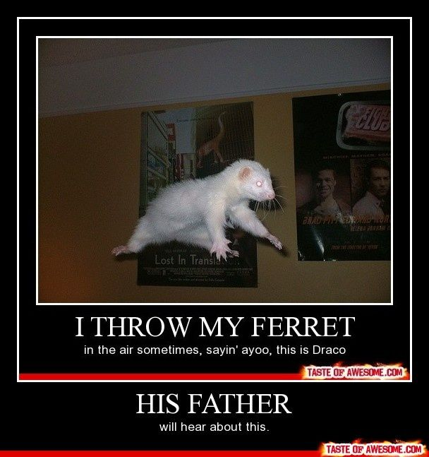 People would only understand this if they     saw the clip when Draco Malfoy gets turned into a     ferret.....yup