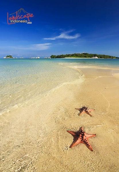 Starfish - Belitung, Sumatera, Indonesia