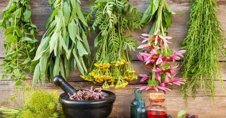 Je moestuin staat misschien tsjokvol met heerlijke, verse kruiden. Je kan die gemakkelijk zelf drogen, en er het hele jaar door van genieten!