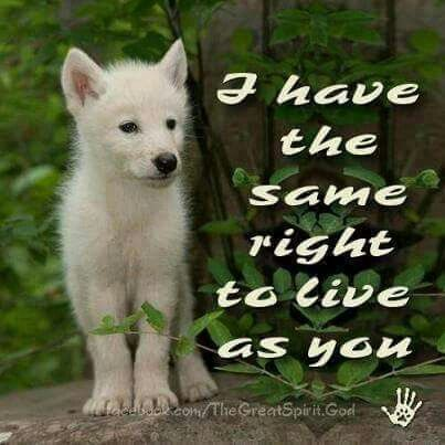 is it right to kill animals Dr plinio analyzes universal declaration of animal rights by  from the  declaration of the rights of man made by the french revolution this.