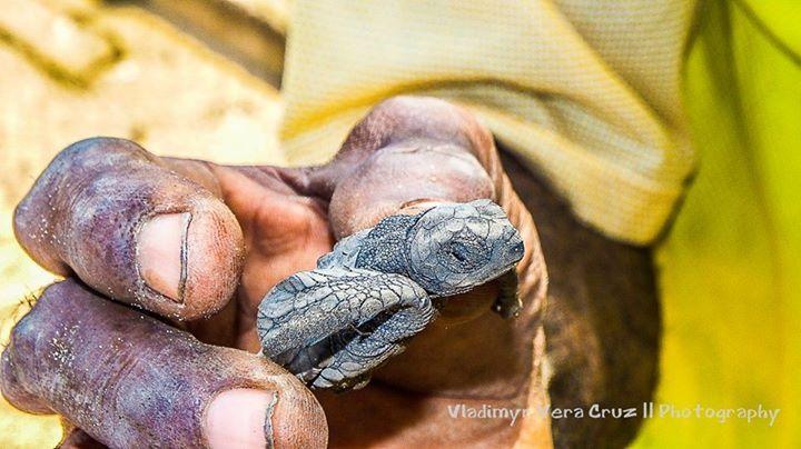 Projecto de Protecção de Tartarugas em Sao Tome e Príncipe  #saoferias - Tour Operator