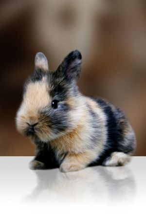 a calico bunny I want it! If anyone shows up at my house on my bday with one you would be my fav person and BFF!