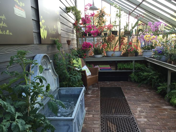 rhs chelsea 2015 beautiful orchid display inside our large bespoke greenhouse with tiber fountain - Large Garden 2015