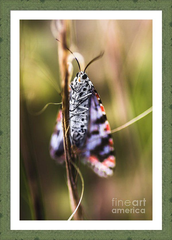 Macro Framed Print featuring the photograph Macro Of Colourful Moth Insect Holding Branch by Jorgo Photography - Wall Art Gallery