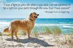 Healing Pet Loss - a dogs message of love