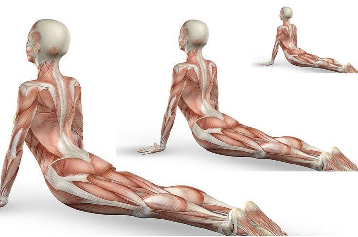 Гимнастика для укрепления внутренних женских органов