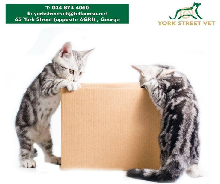 Buy for R100 from #YorkStreetVet and enter your till slip, in store, to stand a chance of winning a R500 voucher. Winner will be announced on Saturday 1 August 2015. T's and C's apply, E and OE. #VetStorehttps://www.facebook.com/Yorkstreetvetshop/photos/pb.646016452164207.-2207520000.1439134251./809127289186455/?type=3