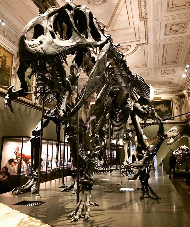 Life found a way and then the way died . . . . . #NaturalHistoryMuseum #Vienna #Austria #museum #dayoff #dinosaur #Allosaurus #skeleton #exhibit #travel #travelgram #traveling #travelphotography #instadaily #Europe #photooftheday #photo #travel #tourism #travelgram #popular #trending #micefx