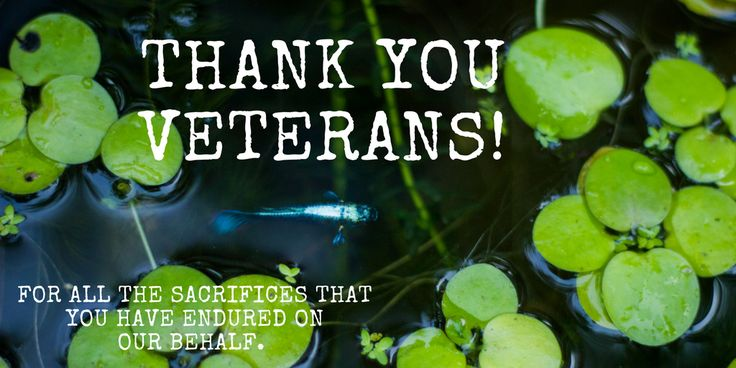 Thank You Veterans Day Meme #Fish #Tank #Therapy #Aquarium #Veteran #Military #Veterans #Day #Celebration #united #states #public #holiday #meme #fishtank #memes #aquariumsforvets #dedication #ptsd #soldiers #soldier #USA #Country #honoring #honor #pride #proud