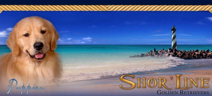 Shor'Line Golden Retrievers :: Golden Retriever Breeder - Illinois, Michigan, Iowa, Indiana & Michigan