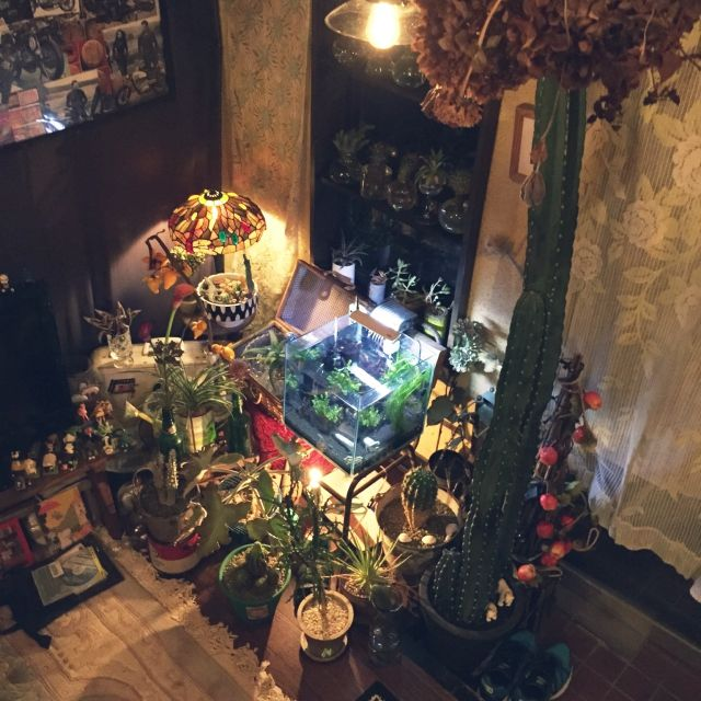 Masahideさんの、昭和レトロ,リメイク鉢,リメ缶,寄せ植え,水耕栽培♡,観葉植物,ステンドライト,熱帯魚♡,多肉植物,サボテン,アンティーク,照明,はんどめいど♪,玄関/入り口,のお部屋写真