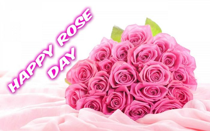Rose Day Images Free