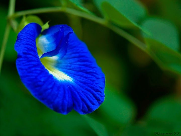 Telepathy : Aparajita ~ Source of Life Energy
