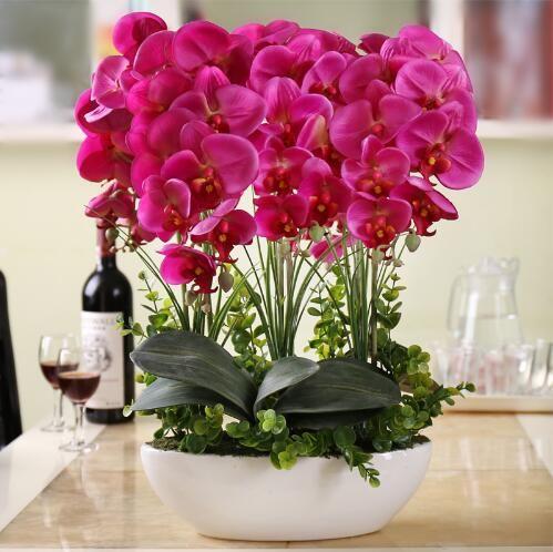 Фаленопсис набор гостиная интерьера цветы в горшках 100 семенакупить в магазине Best seller YanJiao huangнаAliExpress