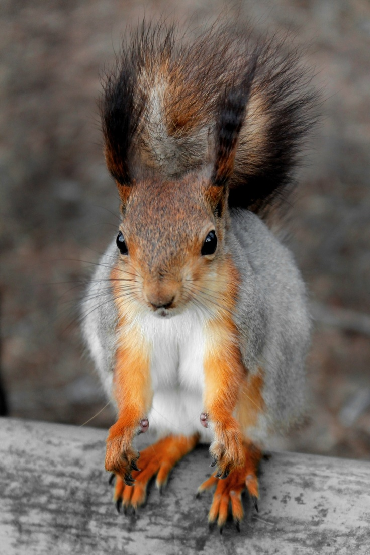Best Squirrel Pictures Ideas On Pinterest Funny Squirrel - Cat squirrel playing cutest thing youll see day