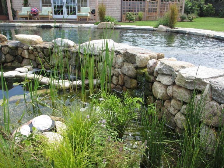 natural (BioTop?) pool in Nantucket