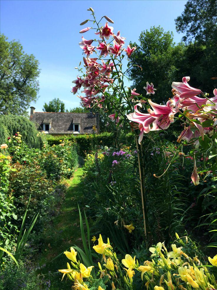 Alors que les vacances commencent, les lys s'épanouissent dans le jardin fleuriste... #eyrignac #jardin #fleur #lys #été #garden #couleur