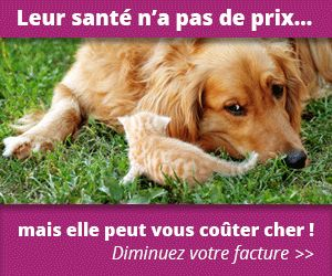 Comparateur assurance santé animaux gratuit