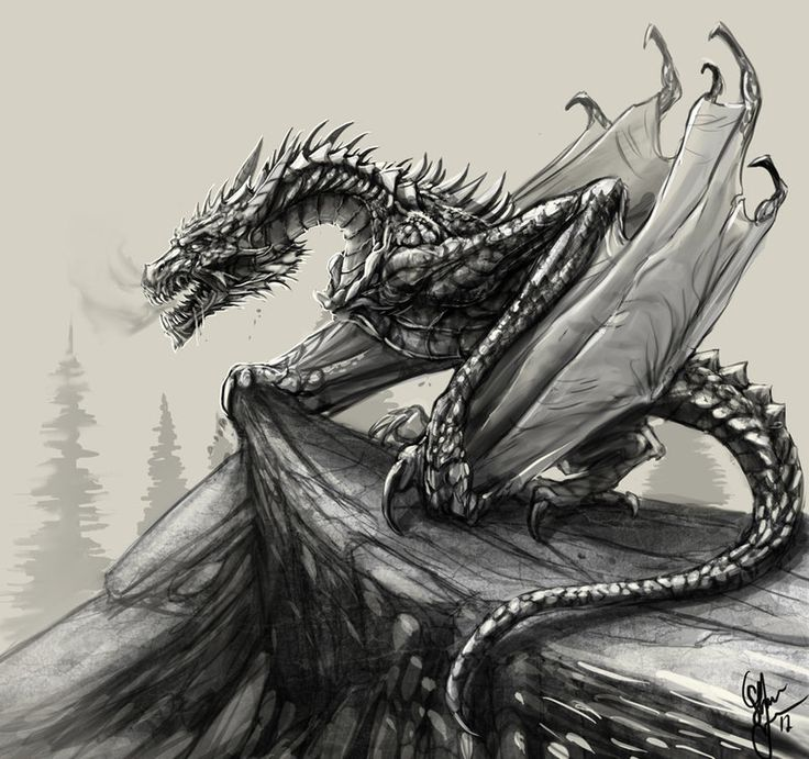 Dragon Sketch By ShaneTyreeArt.deviantart.com On