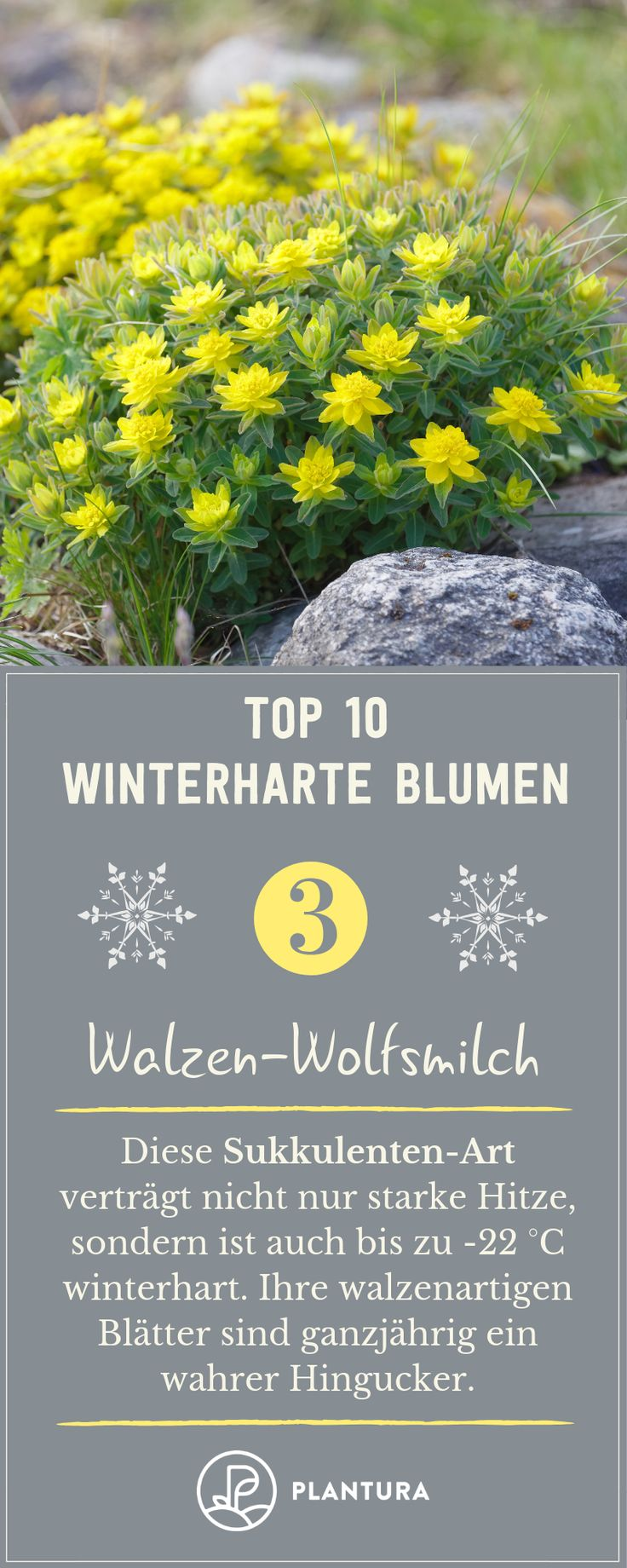 Winterharte Blumen: Die robusten Top 10 für Ihren Garten – Plantura   Garten Ideen & Tipps   Gemüse, Obst, Kräuter
