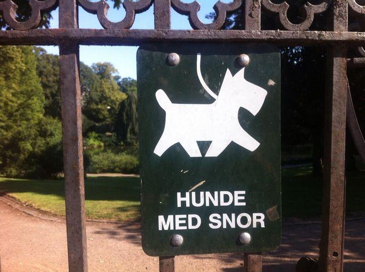 Hond met snor