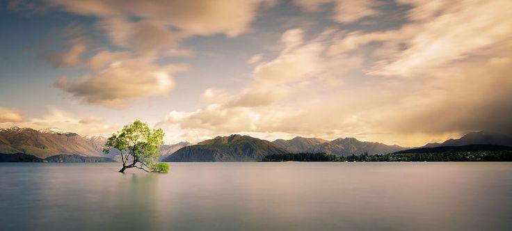 Lone Tree of Lake Wanaka – Wanaka, New Zealand   Atlas Obscura
