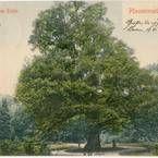 Trauben-Eiche-Finder | Baum des Jahres - Dr. Silvius Wodarz Stiftung