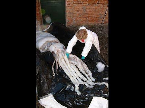 Giant Squid, Animal Phantoms and Killer Sex