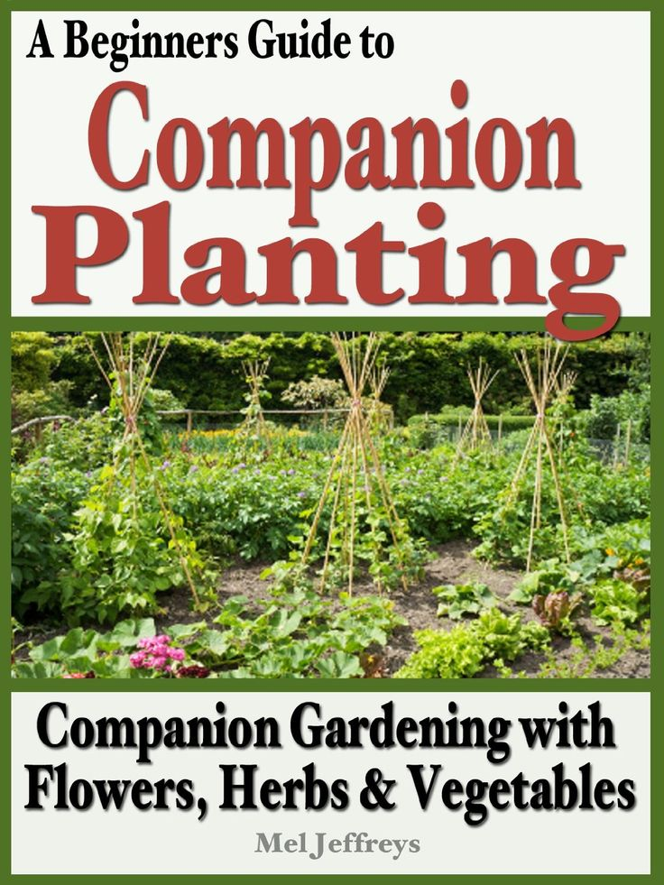 Companion Planting With Zucchini: Best 25+ Companion Gardening Ideas On Pinterest
